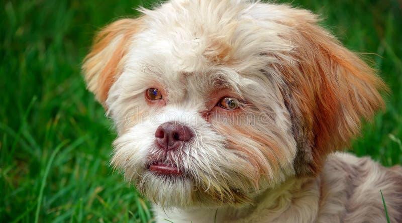 Cão bonito doce na grama verde fotografia de stock