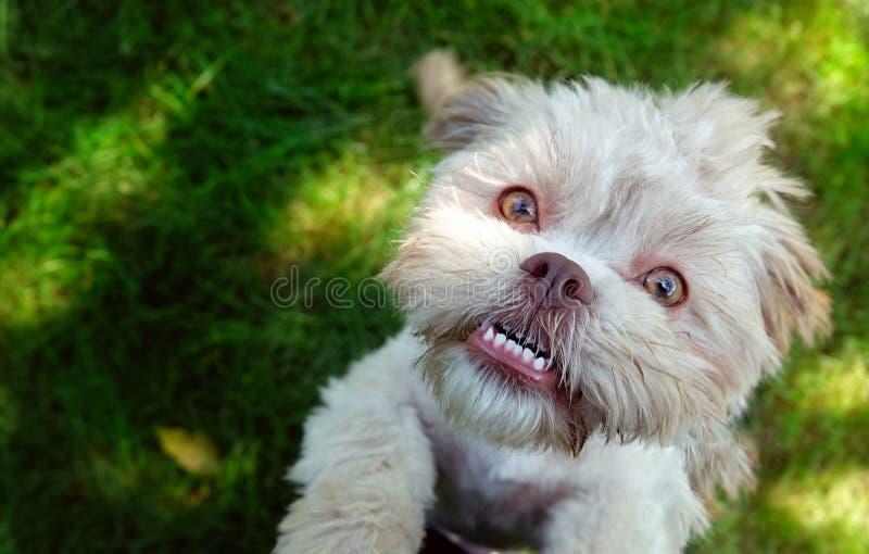 Cão bonito doce na grama verde fotografia de stock royalty free