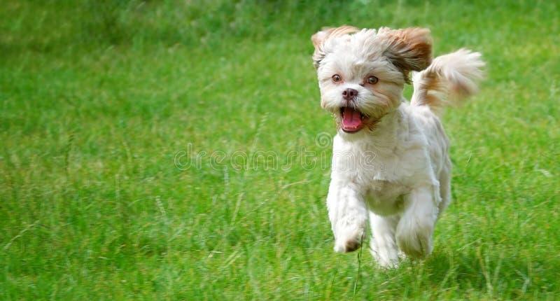 Cão bonito doce na grama verde fotos de stock royalty free
