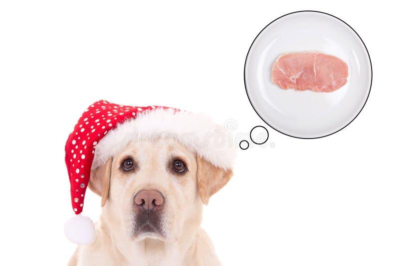 Cão bonito (golden retriever) no chapéu de Santa que sonha sobre o alimento imagem de stock