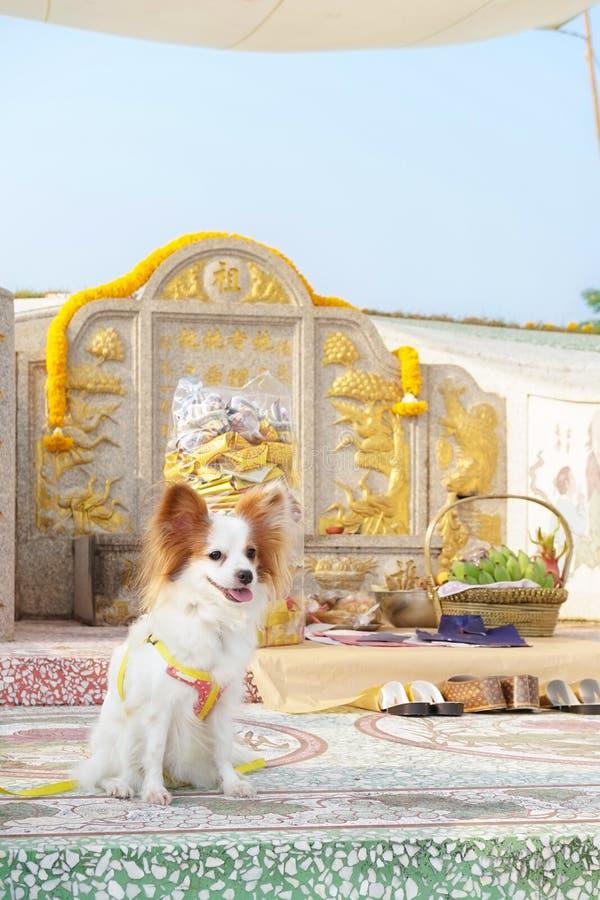Cão bonito na frente do altar da adoração no cemitério dos ances foto de stock royalty free