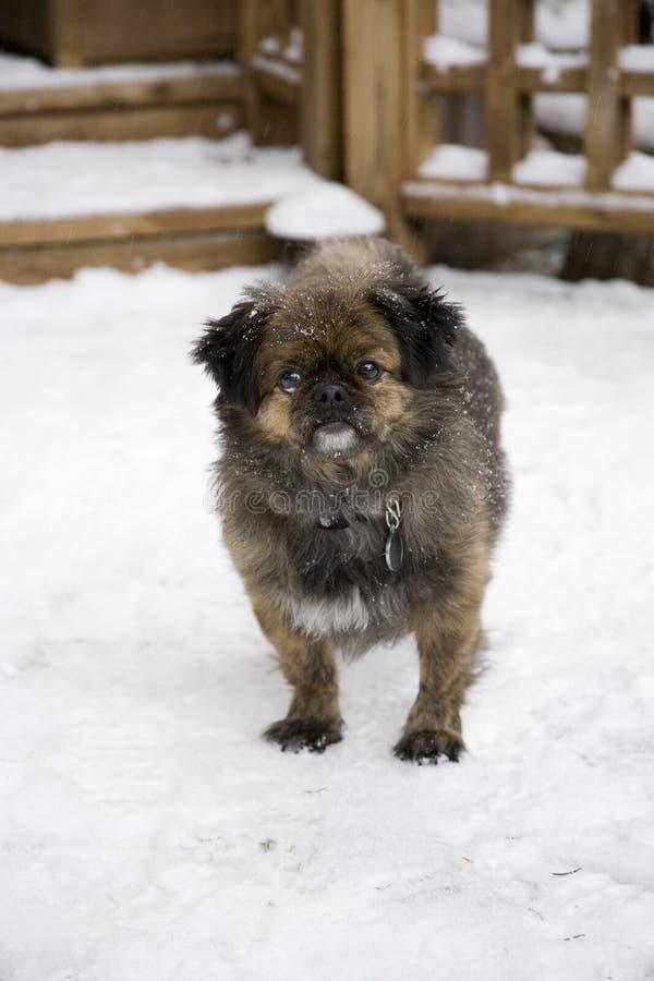Cão bonito na neve fotos de stock