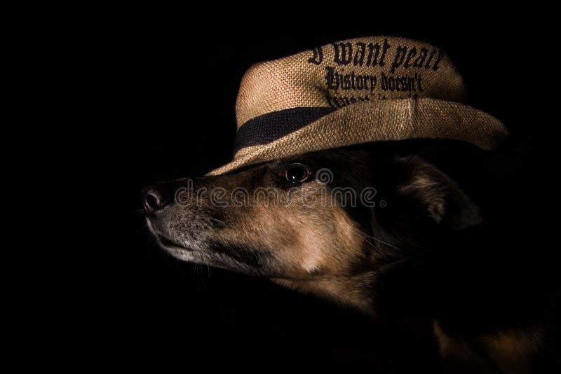 Cão bonito no chapéu em um fundo preto foto de stock royalty free