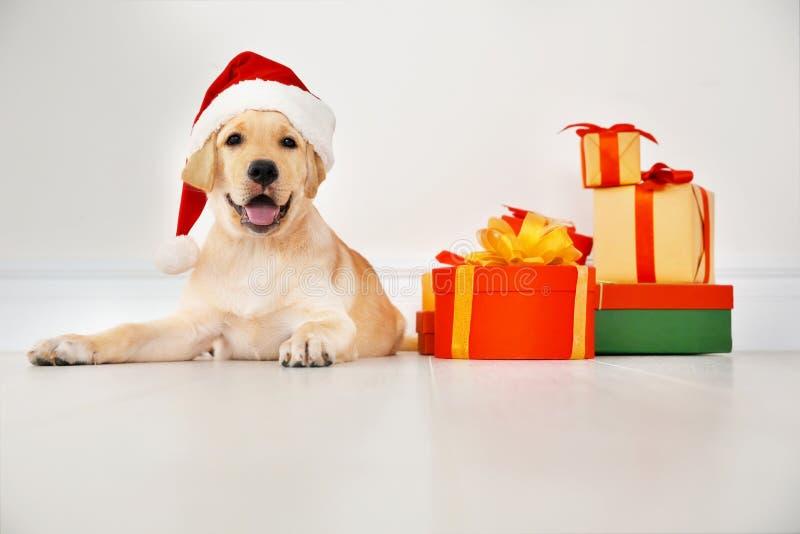 Cão bonito no encontro do chapéu de Santa Claus foto de stock royalty free