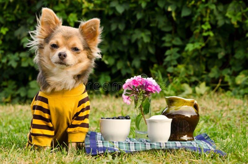 Cão bonito no piquenique no jardim do verão fotografia de stock