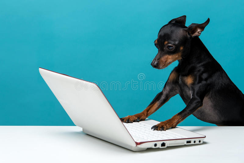 Cão bonito que aprecia o laptop no fundo azul fotografia de stock royalty free