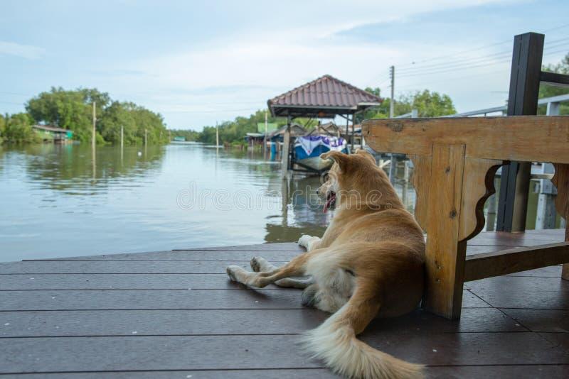 Cão bonito que senta-se perto do rio foto de stock