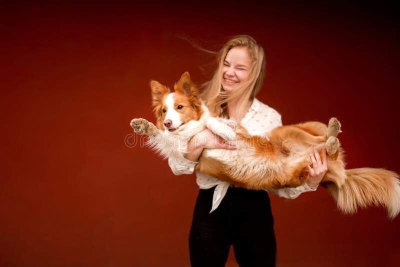 Cão bonito vermelho e branco border collie nas mãos da menina pouca obscuridade imagem de stock