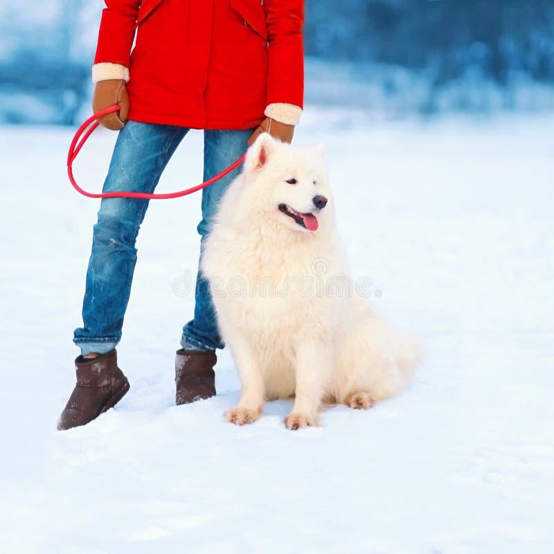Cão branco do Samoyed no dia de inverno em uma trela com proprietário da mulher foto de stock royalty free