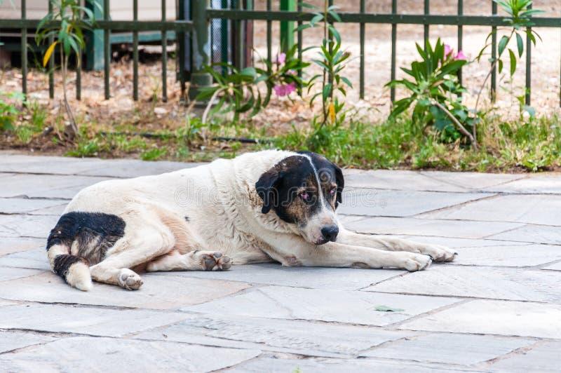 Cão branco grande da rua que encontra-se para baixo na terra no pavimento em Atenas imagens de stock royalty free