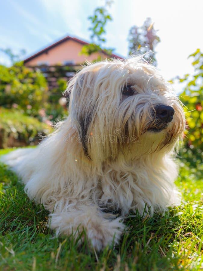 Cão branco no jardim fotografia de stock royalty free