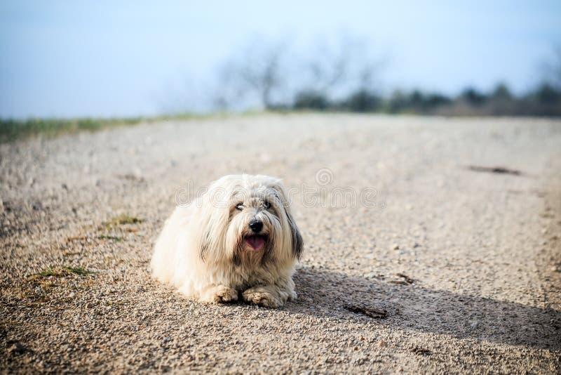 Cão branco no prado imagem de stock