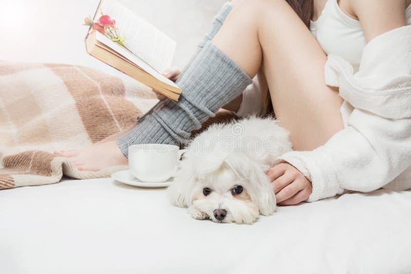 Cão branco pequeno calmo triste sonolento com a menina na cama imagem de stock royalty free