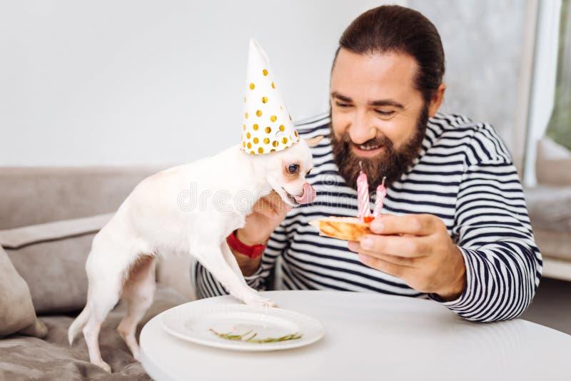 Cão branco que tem o apetite real para tentar o bolo de aniversário doce fotografia de stock royalty free
