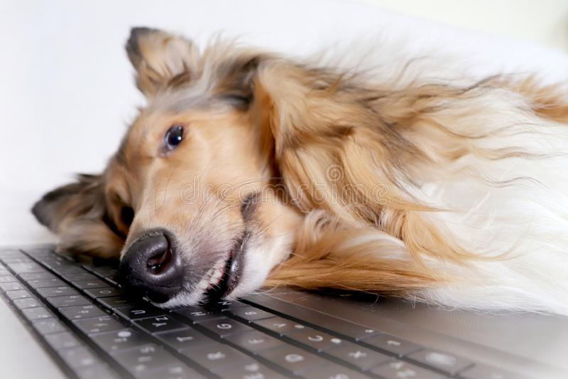 Cão cansado pelo caderno fotografia de stock