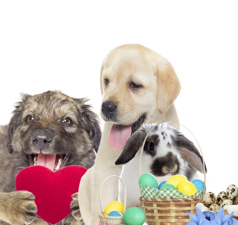 Cão, coelho e grupo da Páscoa foto de stock