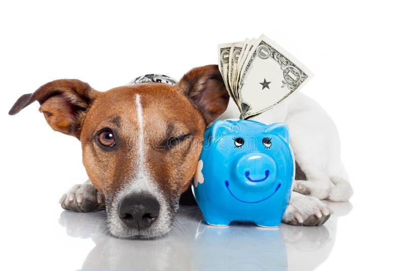 Cão com banco piggy imagens de stock royalty free