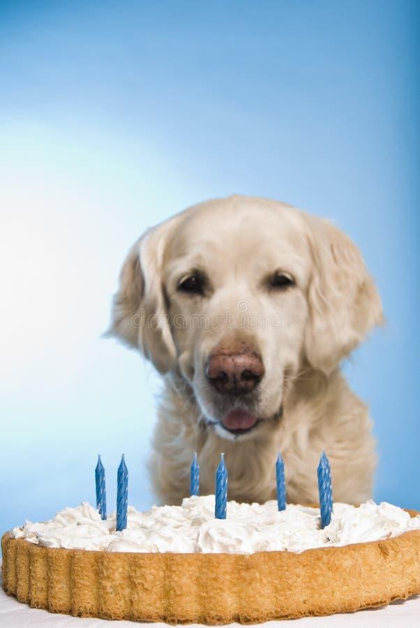 Cão com bolo fotografia de stock royalty free