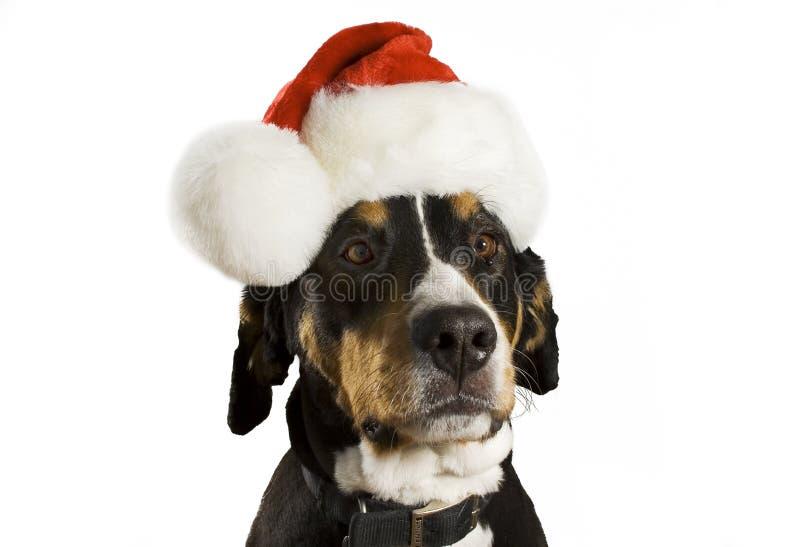 Cão com chapéu do Natal fotografia de stock royalty free