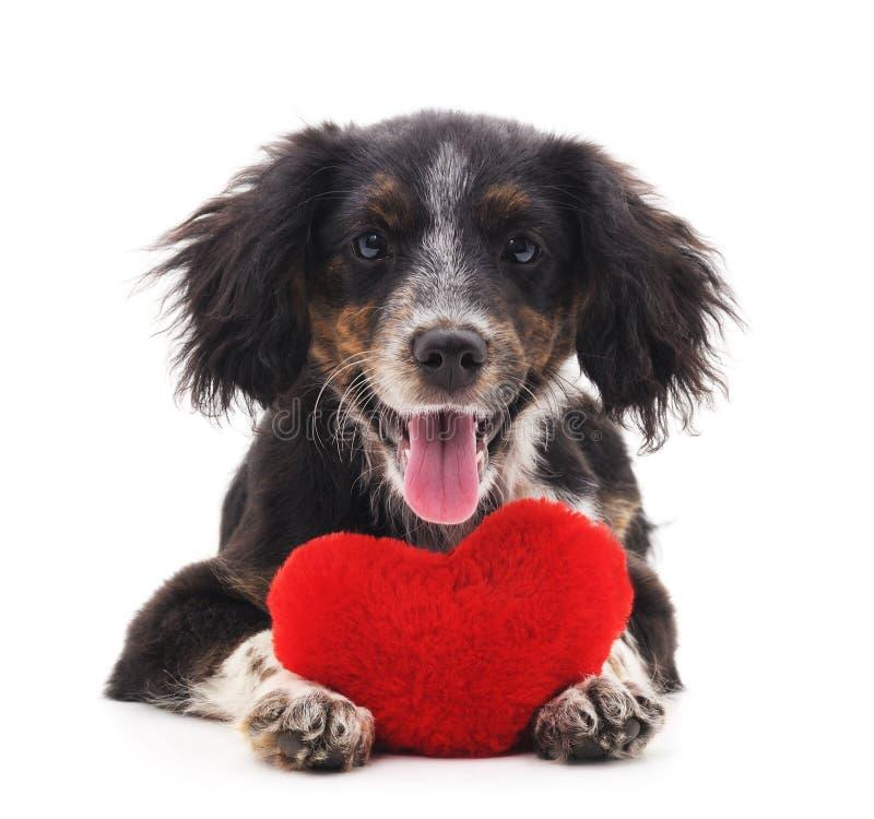 Cão com coração fotos de stock royalty free