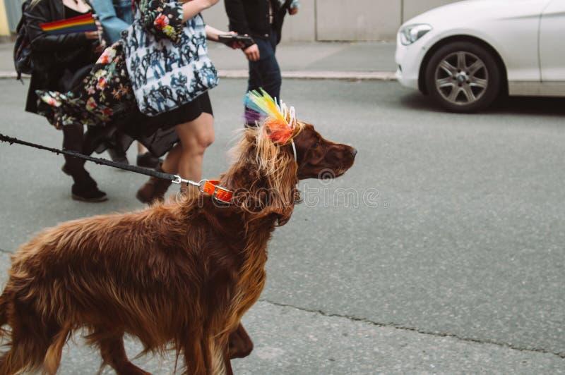 Cão com a coroa brilhante no festival do orgulho de Helsínquia na rua fotografia de stock royalty free
