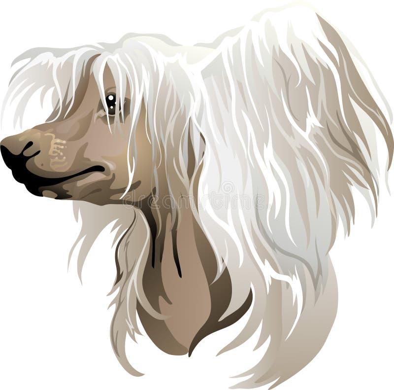 Cão com crista chinês ilustração stock