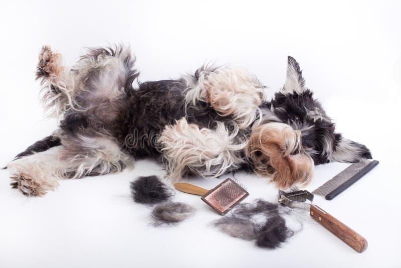 Cão com equipamento da preparação fotografia de stock