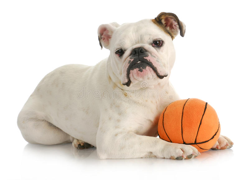 Cão com esfera fotografia de stock royalty free