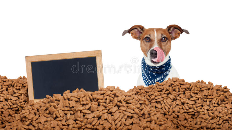 Cão com fome em uma chuva do alimento fotografia de stock royalty free