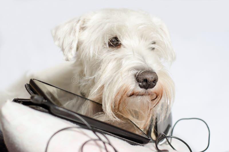 Cão com fones de ouvido imagem de stock royalty free