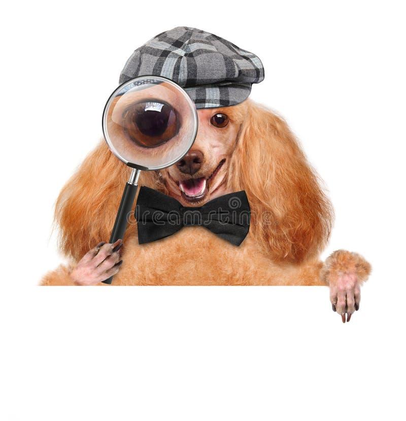 Cão com lupa e pesquisa fotografia de stock