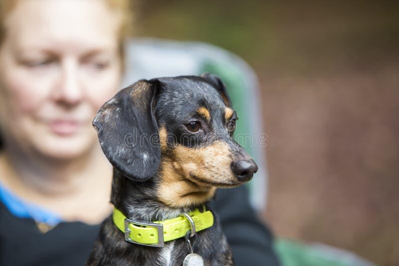Cão com mamã fotos de stock royalty free