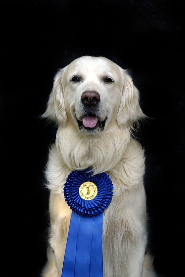 Cão com medalha imagem de stock