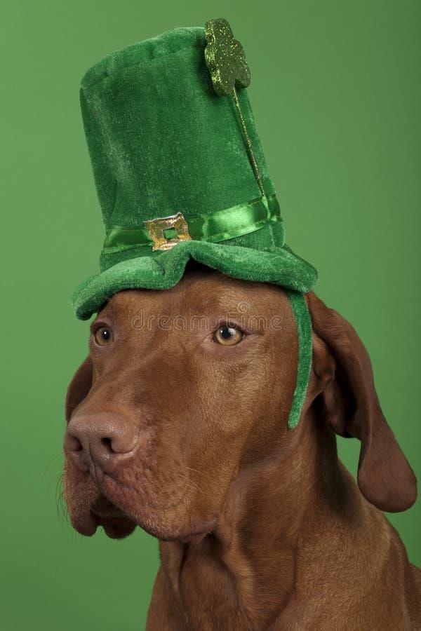 Cão com o chapéu do dia de St.Patrick imagens de stock