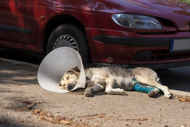 Cão com o colar do cone que coloca ao lado do carro foto de stock