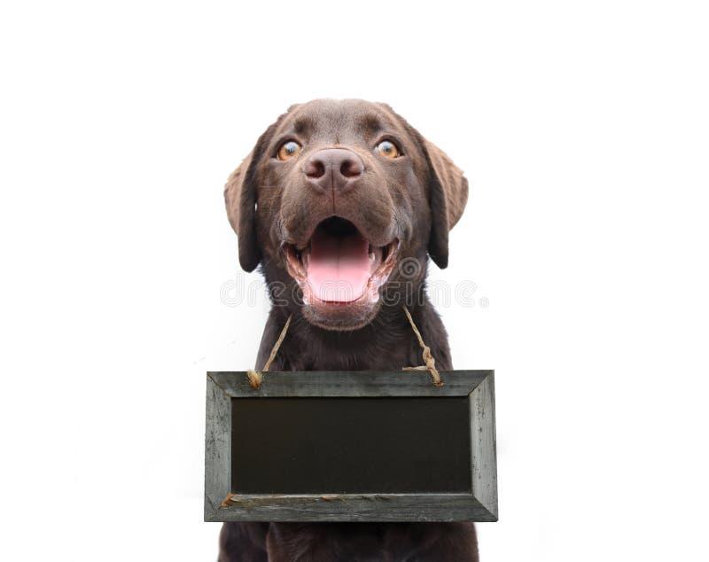 Cão com o colar vazio da placa do sinal com espaço para próprio isolado do texto fotografia de stock