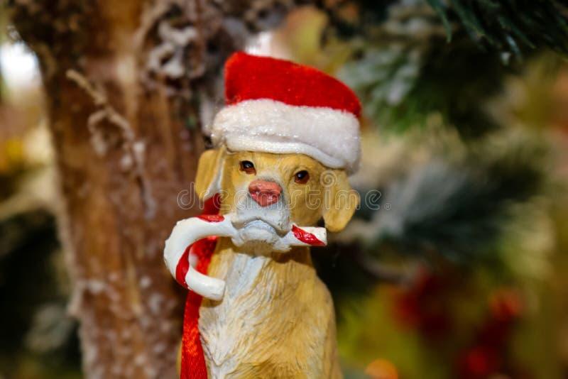Cão com o ornamento do bastão de doces e do chapéu de Santa foto de stock