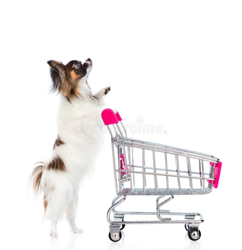 Cão com o trole da compra que olha acima Isolado no backgrou branco imagens de stock royalty free