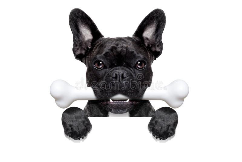 Cão com osso fotografia de stock