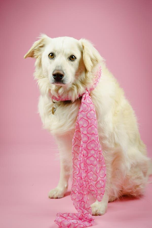 Cão com rosa imagens de stock royalty free