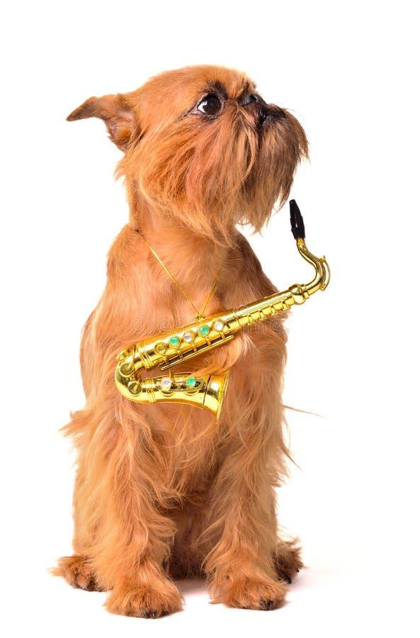 Cão com saxofone foto de stock royalty free