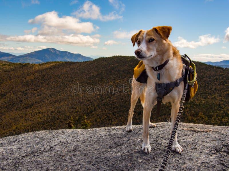 Cão com a trouxa na cimeira da montanha foto de stock