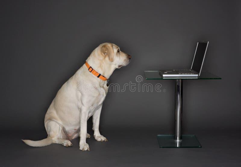 Cão com um portátil fotografia de stock royalty free