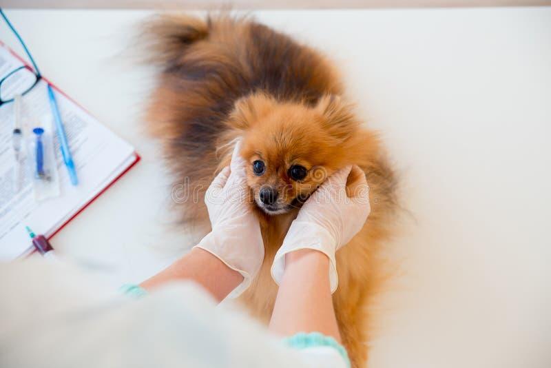 Cão com um veterinário fotos de stock royalty free