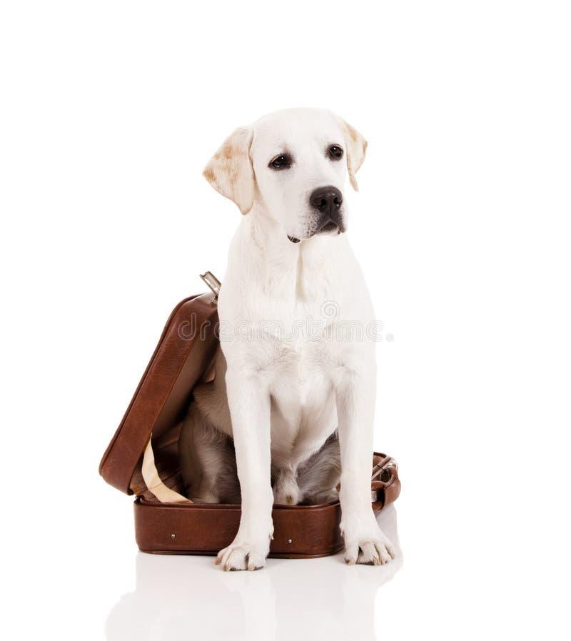 Cão com uma mala de viagem fotos de stock