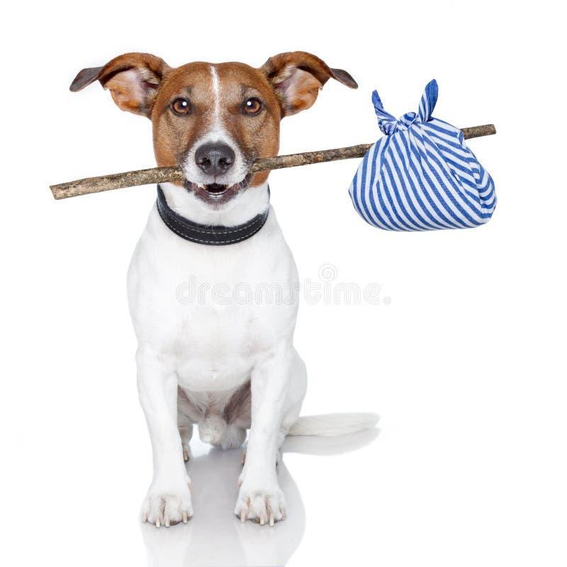 Cão com uma vara fotografia de stock royalty free