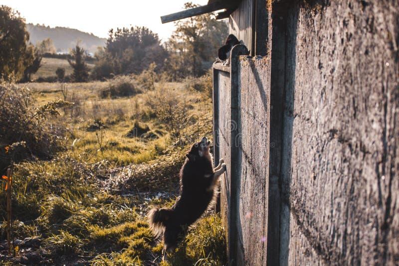 Cão contra o gato fotografia de stock royalty free