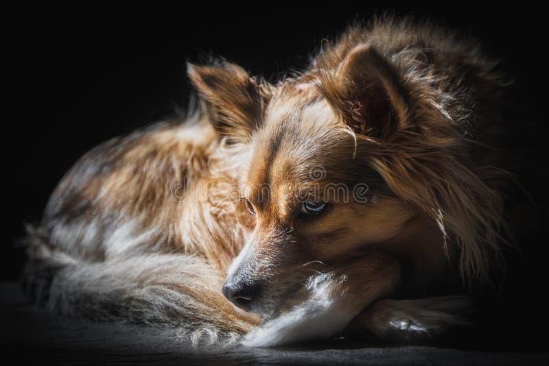 Cão contrasty pensativo da raça misturada ensolarado fotografia de stock