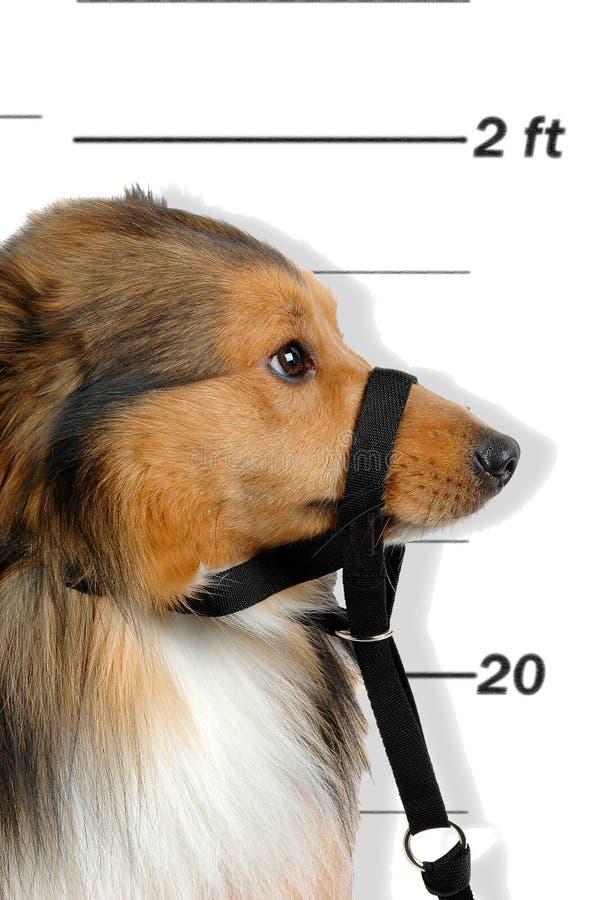 Cão criminoso imagem de stock royalty free