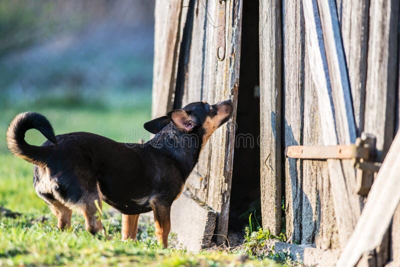 Cão curioso imagens de stock